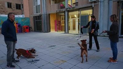Va de gossos! Introducció a l'ensinistrament i la educació canina.