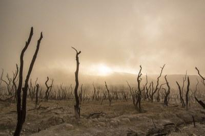 La migració climàtica: una realitat invisibilitzada?
