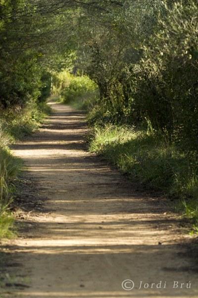 Caminada de tardor 2012 en memoria dels companys Guillem Riola i Carmen Olivenza