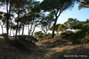 bosc de la marquesa 2