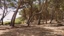 bosc de la marquesa 5