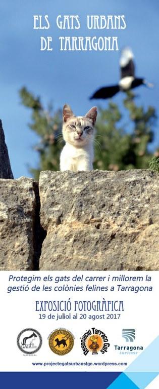 """L'Espai Turisme inaugura avui l'exposició """"Els gats urbans de Tarragona"""""""