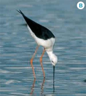 L'Estiu TarragonaJove proposa una activitat de descoberta de les aus al Parc del Francolí