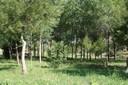 Parc de Sant Pere i Sant Pau 03