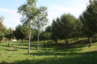 Parc de Sant Pere i Sant Pau