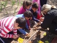 Educació ambiental escoles