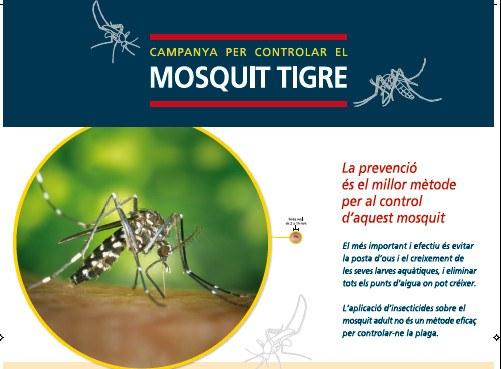 Engega la campanya preventiva del mosquit tigre