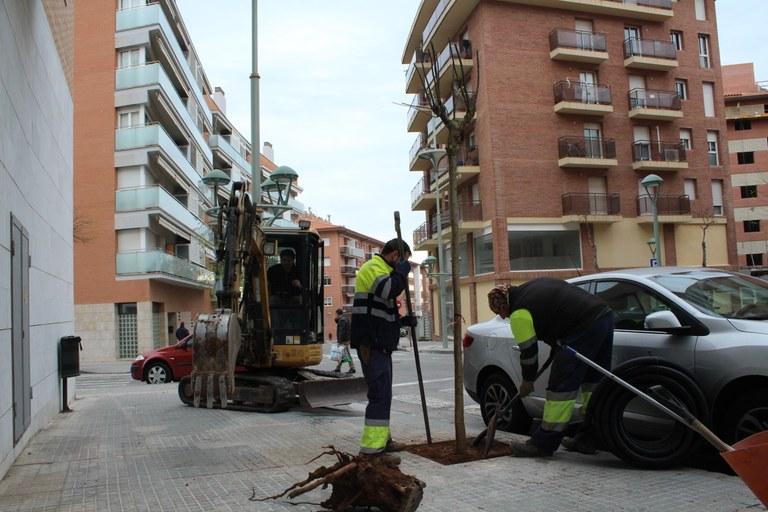 Campanya de reposició de l'arbrat dels espais públics