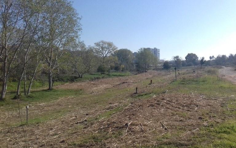 L'ACA i l'Ajuntament de Tarragona adeqüen un tram del riu Francolí, retira la vegetació invasora i garanteix, així, la circulació de l'aigua