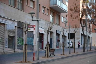 Espais Públics inicia la reposició de 350 arbres a tota la ciutat