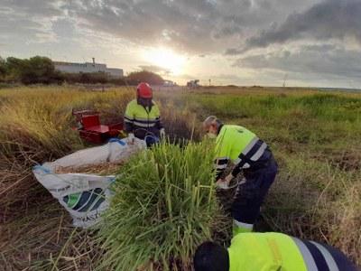L'Ajuntament de Tarragona realitza actuacions de manteniment i adequació al camí de Solimar fins a la platja Llarga