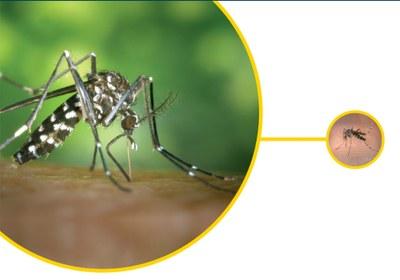 L'Ajuntament de Tarragona reforça els tractaments preventius per reduir la presència de mosquit tigre