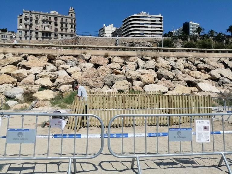 L'Ajuntament de Tarragona arranja les instal·lacions de custòdia del niu de tortuga babaua de la platja del Miracle