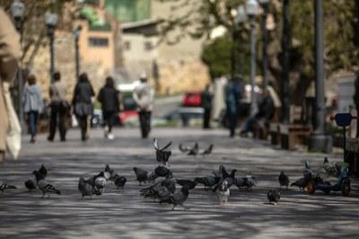 L'Ajuntament de Tarragona, l'ICAT i el CICAT consensuen l'ús de pinso anticonceptiu en la gestió de les poblacions de coloms