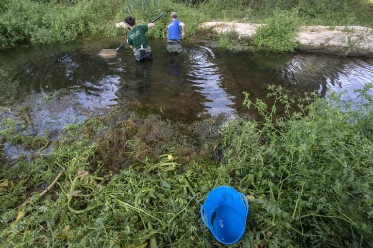 L'Ajuntament de Tarragona rescata peixos al tram baix del riu Francolí