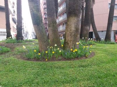 L'Ajuntament de Tarragona millora les rotondes de la ciutat plantant bulbs de flors per guanyar en diversitat i color