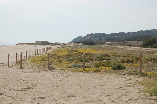 Cinc actuacions preservaran les dunes de la platja Llarga