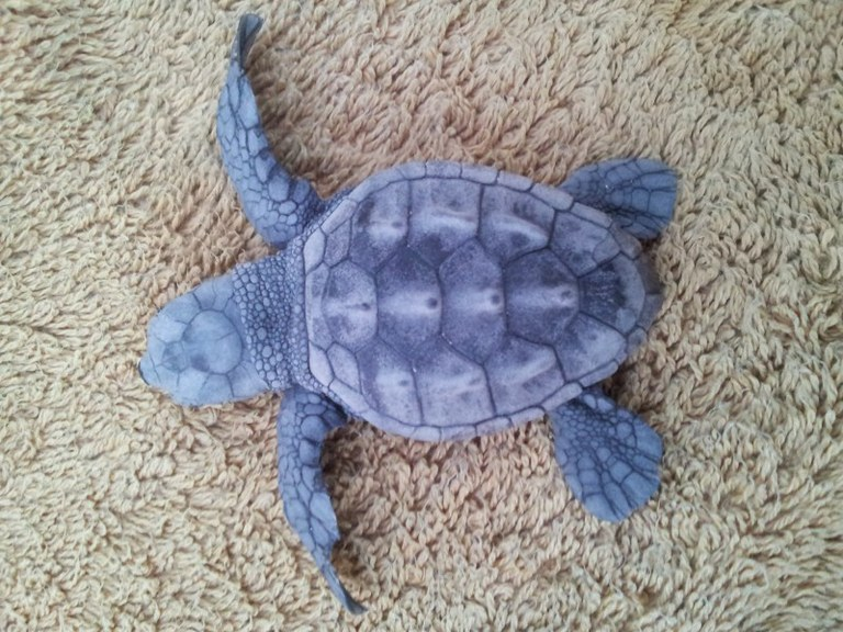 Xerrada sobre les tortugues marines