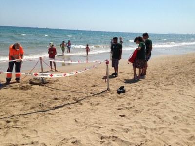 Una tortuga babaua ha aparegut morta aquesta setmana a la platja Llarga