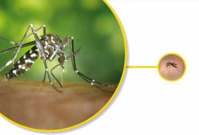 Comença la campanya preventiva del mosquit tigre a Tarragona