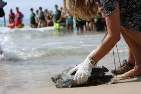 Jornada informativa sobre la nidificació de tortugues marines