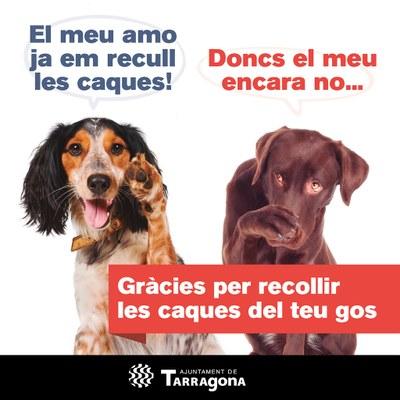 La nova Ordenança sobre tinença responsable d'animals a punt per la seva aprovació el proper ple