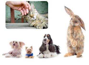 La venda d'animals al carrer se suspendrà un cop el plenari ho aprovi