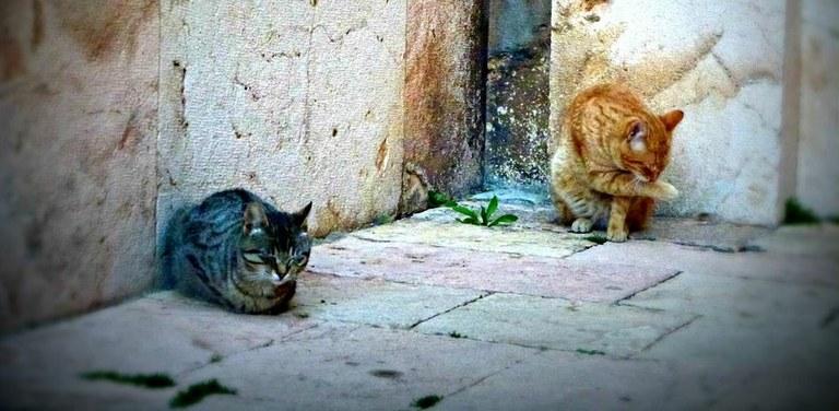 Nota informativa en referència a les colonies de gats ferals