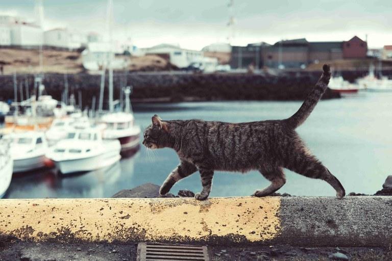 Sobre les colònies de gats ferals