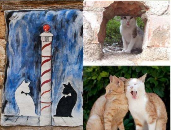 Tarragona engega un projecte pilot de gestió de les colònies de gats a l'espai públic