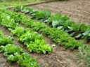 Projecte per la creació d'un espai verd per protegir els horts ecològics que hi ha a un espai en desús a Sant Salvador